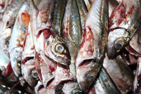gutted: Gutted Mackerel Stock Photo