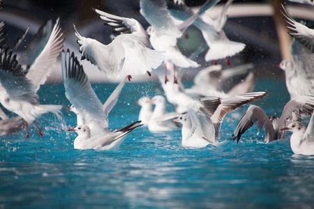waterbird: Waterbird