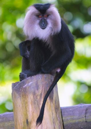Monkey in Indonesia Stock Photo