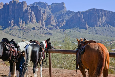 Horses in Arizona USA photo