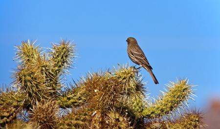 Bird in the Desert photo