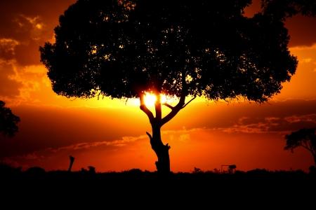 animal welfare: Sunset in the Masai Mara Kenya