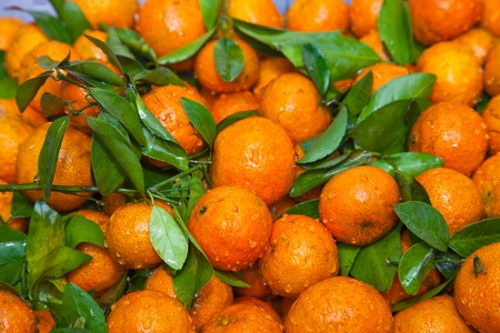 Journal of clementines Stock Photo - 16306688