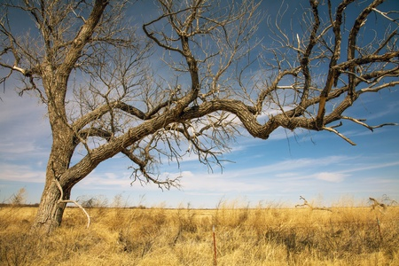 Landschaft in Texas