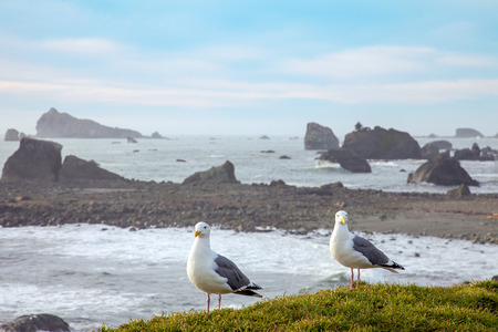 America rugged Pacific coast in Oregon Florence photo