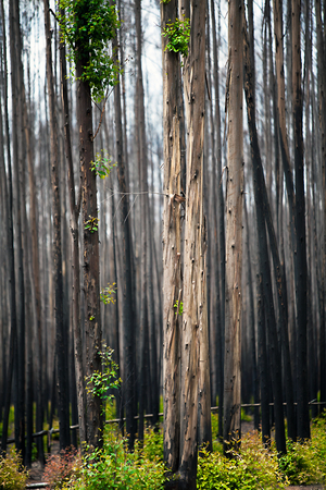free education: After a forest fire in South Africa