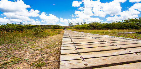 Estuary Boardwalk at the San Lucia River South Africa Stock Photo