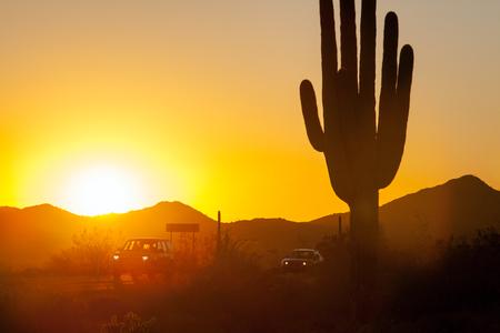 Saguaro Cactus in the Sonoran Desert Arizona USA Stock Photo