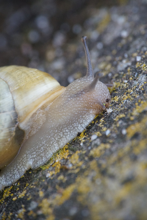 Snail creeping up a wall