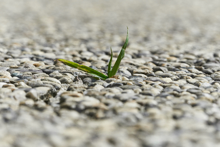 Little grass plant growing out of concrete slab