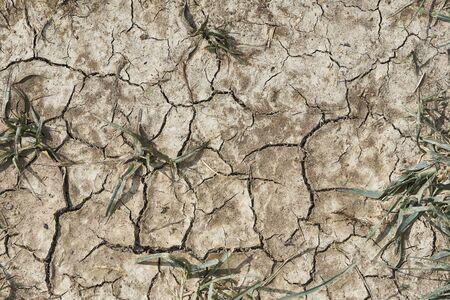 Cracked arid earth Banco de Imagens
