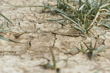 Cracked arid earth Stock Photo