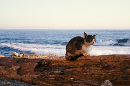street cat ist sitting on a tree in front of the sea, Alghero, Italy