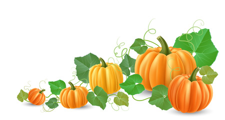 Corner decoration with realistic pumpkin and green leaf. Vector illustration for autumn season, Halloween or Thanksgiving holiday. Illustration
