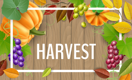 Realistic vector illustration for harvest season and autumn design.