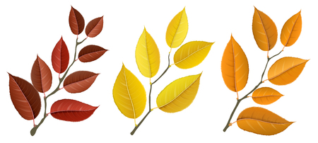 Autumn branch set Realistic vector illustration