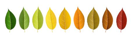 Colorful autumn leaf set Ilustrace