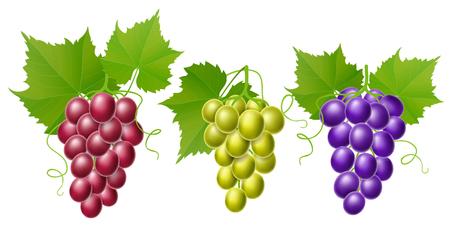 Grape set Realistic vector illustration