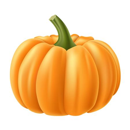 Realistic pumpkin isolated Ilustrace