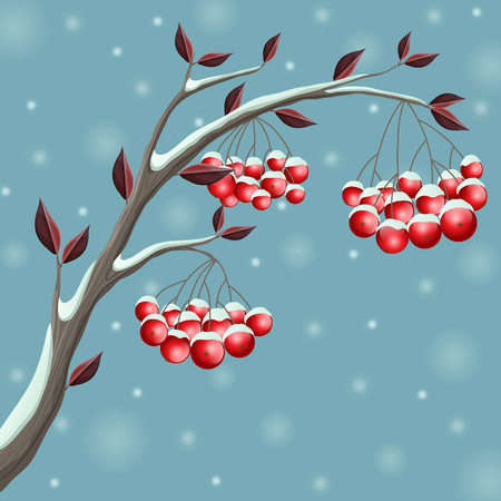 Snowy winter branch illustration with red berry and leaf, in snowfall. Vector illustration for December and holiday season, on blue background