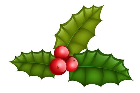Planta de acebo realista con hojas y frutos rojos. Aislado en blanco, diseño para Navidad, invierno u otro diseño de vacaciones