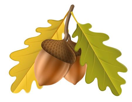 Realistische Eichel mit gelbem Eichenblatt. Vektorillustration lokalisiert auf Weiß für Herbst- und Herbstnaturdesign Vektorgrafik