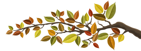 Autumn tree branch with colorful autumn leaf set. Vector illustration for horizontal banner, isolated on white for nature design Ilustrace