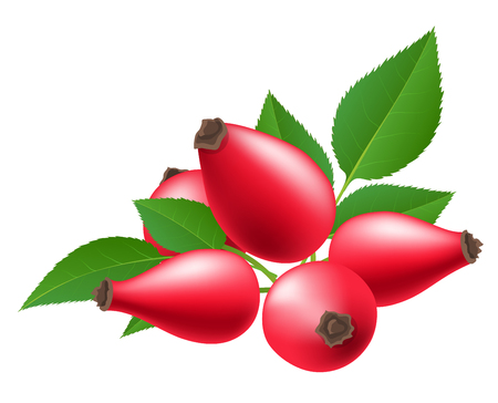 Red rose hip berry with green leaf. Vector illustration isolated on white, for autumn and nature related design