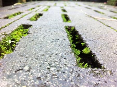 grid: Natural road