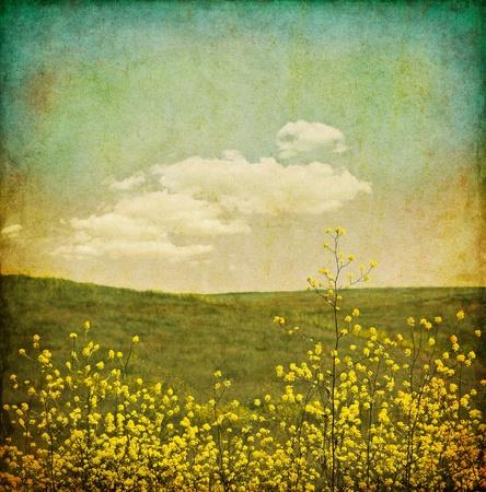 paisaje vintage: Un campo de plantas de mostaza negra con un aspecto envejecido, vintage.