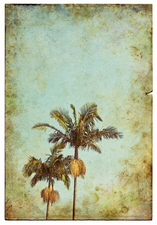An old, vintage postcard with two palm trees and a grunge vignette.