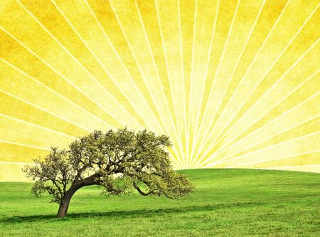 A photo-illustration of an old oak on a textured sunrise background with radiating light rays. illustration