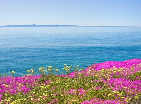barbara: The Santa Barbara channel with purple ice plant flowers in the foreground.