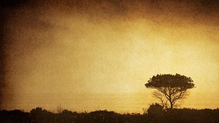 Het silhouet van een oude eik langs de Calfornia kustlijn met een sepia-tinten, vintage papier achtergrond. Het beeld toont een aangename papier graan en vezels op 100%.