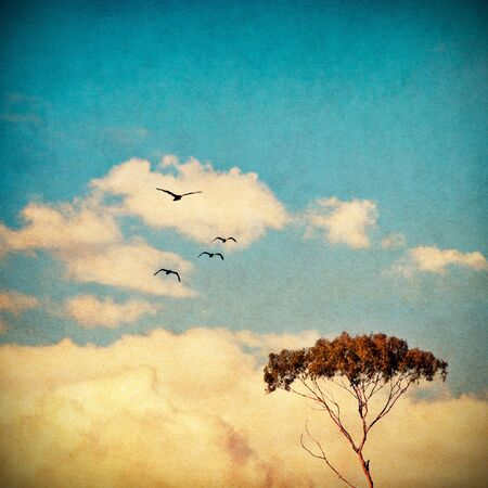 A eucalyptus tree done in a vintage style with a cross-processed colors.
