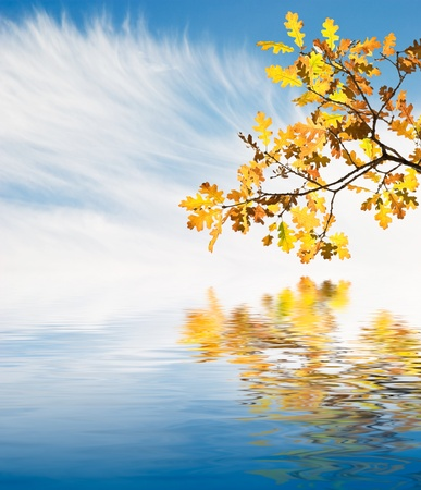 Golden autumn leaves reflected in calm water. Stock Photo