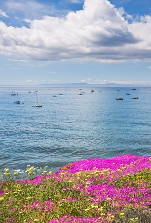 santa barbara: Santa Barbaras offshore anchorage area with purple ice plant in the foreground. Stock Photo
