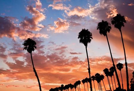 A row of palm trees at sunset in Santa Barbara, California.