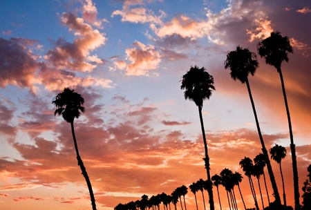 barbara: A row of palm trees at sunset in Santa Barbara, California. Stock Photo