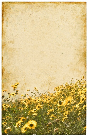A vintage postcard with a yellow flower foreground. photo