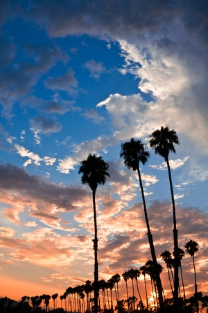 Silhouettes of palm trees at sunset in Santa Barbara, California.