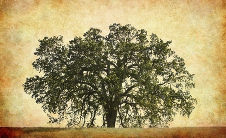 textured paper: An old oak on a textured paper background.
