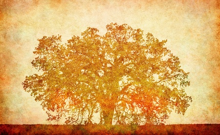 An old oak on a textured paper background.