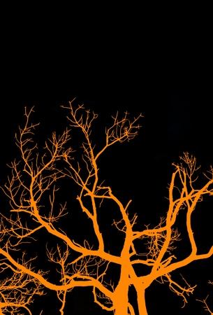 A graphic rendition of an old, gnarled tree in halloween colors. Stock Photo
