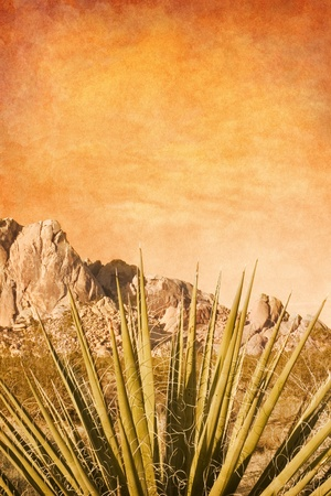 mojave desert: A Mojave Yucca plant with a textured sky background.