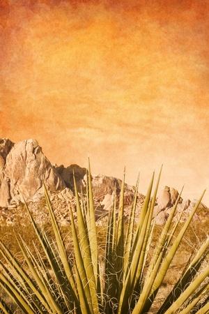 agave: Una planta de yuca de Mojave con un fondo de cielo con textura.