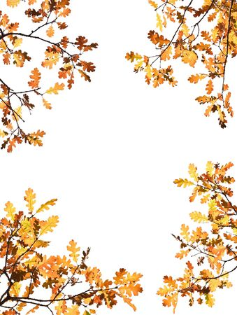 Autumn leaves on white with a clipping path. photo