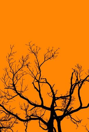 gnarled: Una interpretaci�n gr�fica de un �rbol viejo y retorcido en colores de Halloween.
