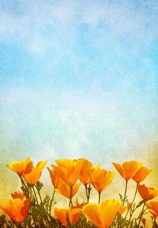 안개와 안개의 그라데이션 배경을 가진 양귀비 꽃. 이미지는 100 % 기쁘게 종이 그레인 텍스처를 표시합니다.