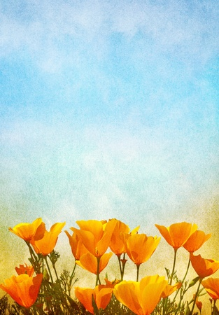 field of flowers: Poppy flowers with a gradient background of fog and mist.  Image displays a pleasing paper grain texture at 100%. Stock Photo